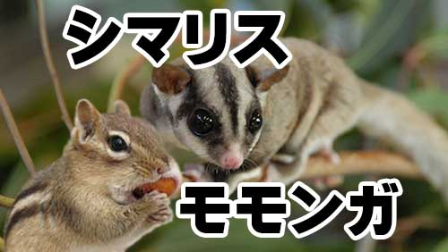 シマリスとモモンガ