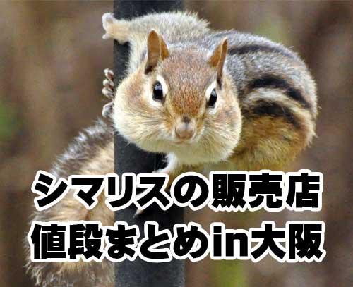 シマリス販売店大阪